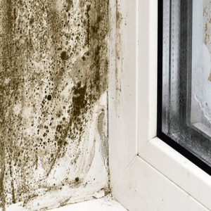 condensation damp window