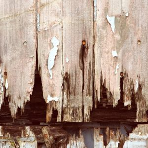 dry rot beams treatments