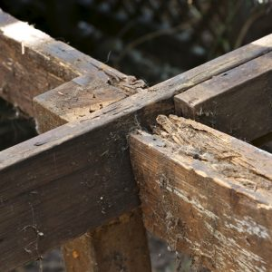 dry rot joints in the North East